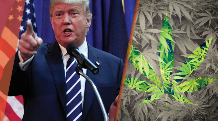 What Marijuana Legalization Could Mean for the Market: A Message for America's New 'Jobs President'